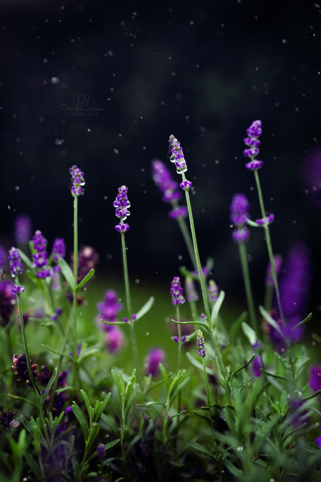 Blumen_Lavendel_Die Roadies_Landschaft_Fotografin Julia Neubauer