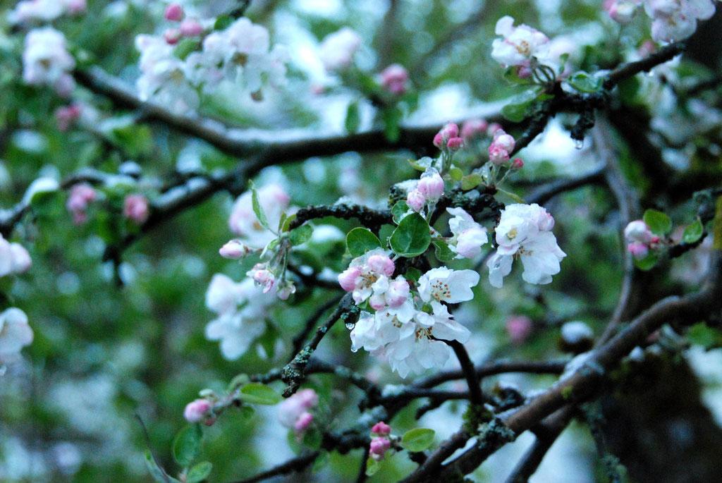 Es ist kalt im Blütenland