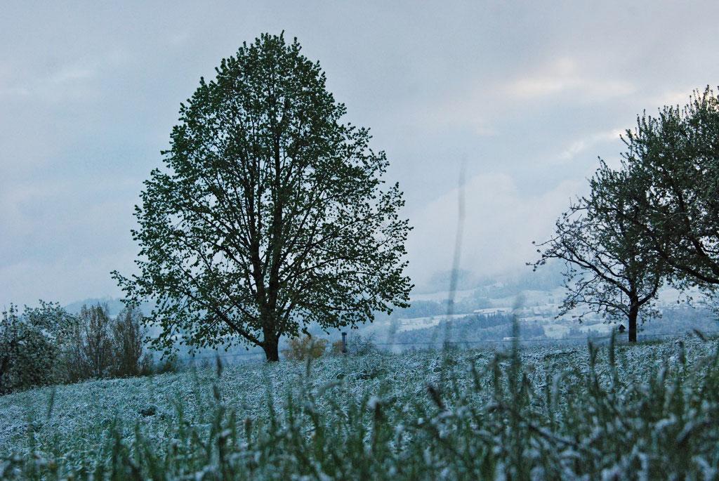 Ein Baum beugt sich im Wetter nicht!