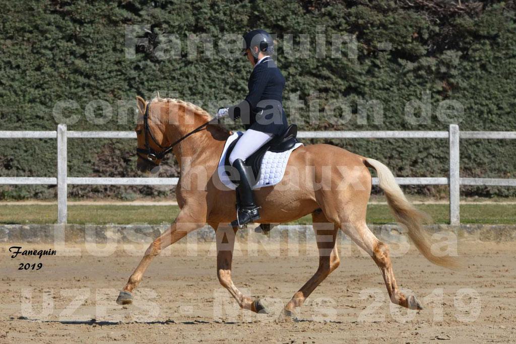 Confirmation de chevaux LUSITANIENS  aux Haras d'UZES le 30 Mars 2019 - Étalon Palomino Monté