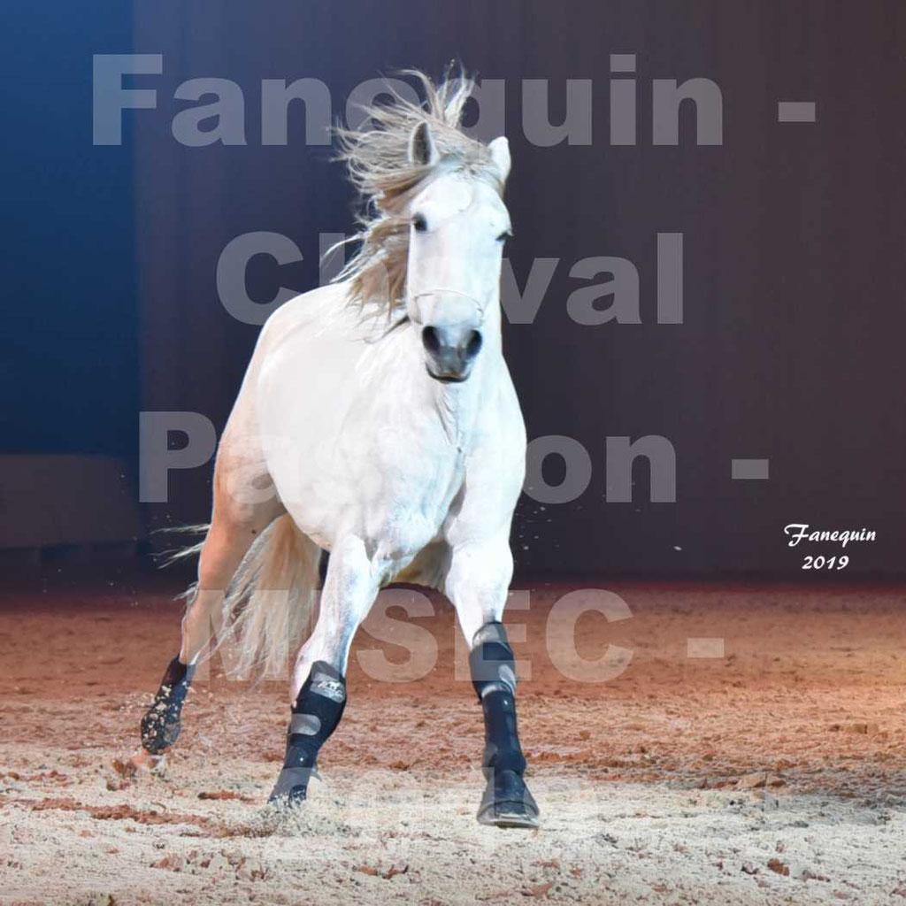 Cheval Passion 2019 - M. I. S. E. C. - Michel CASSAN & cheval en liberté - 18