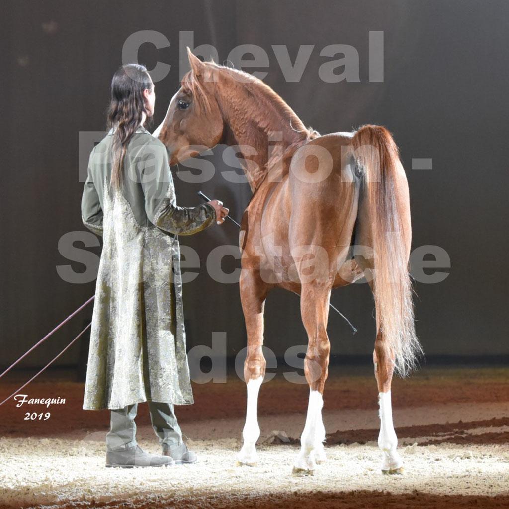 Cheval Passion 2019 - Spectacle Les CRINIÈRES d'OR - Frédéric PIGNON & cheval Arabe alezan en liberté