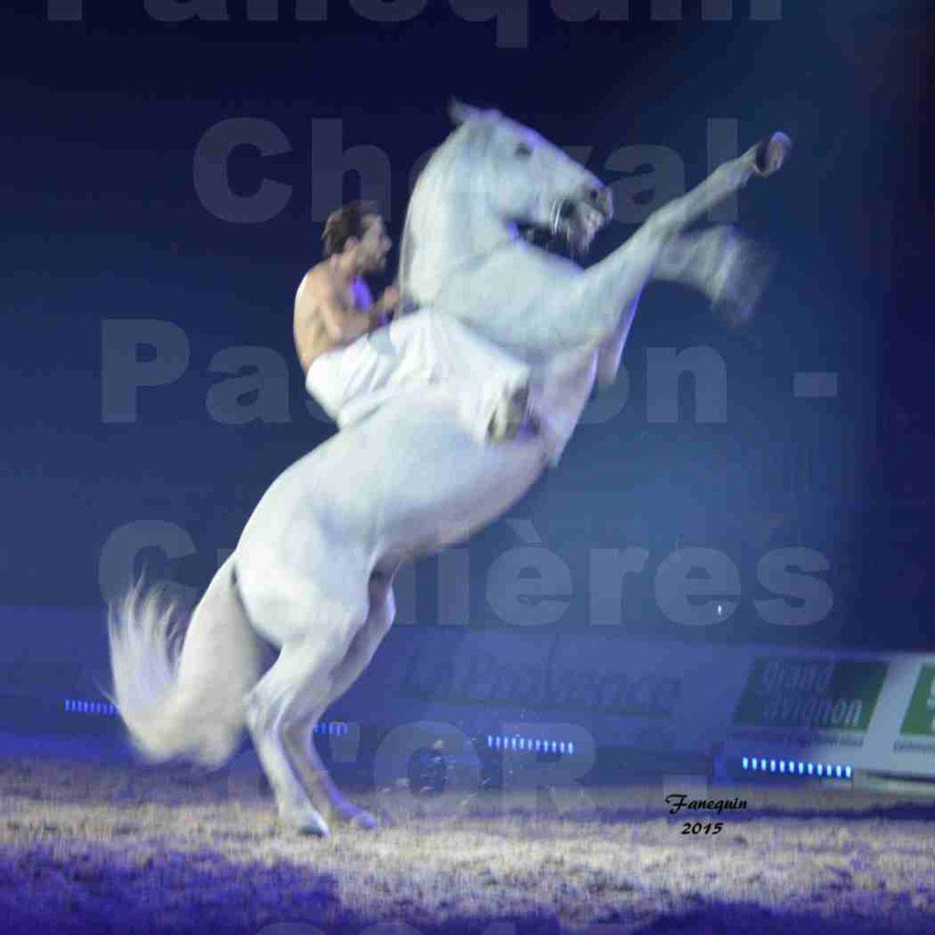 Cheval Passion 2015 - Les Crinières d'OR - Cavalier & cheval blanc