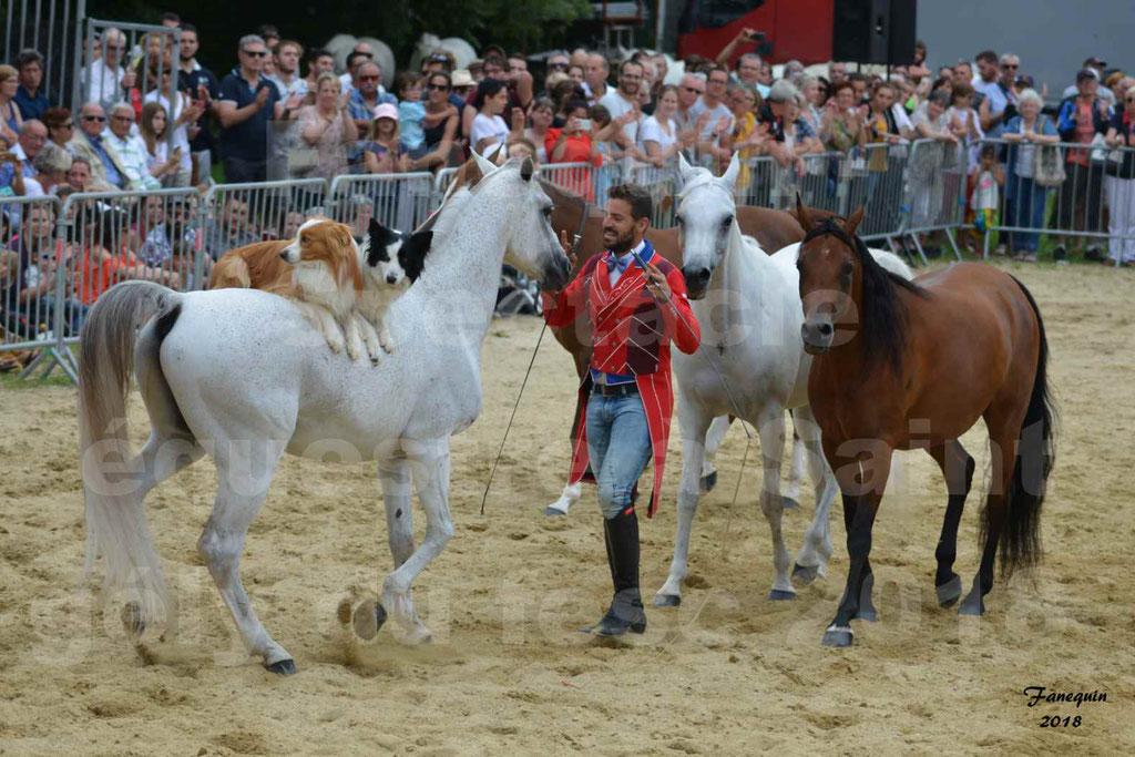 SANTI SERRA avec 4 chevaux en liberté