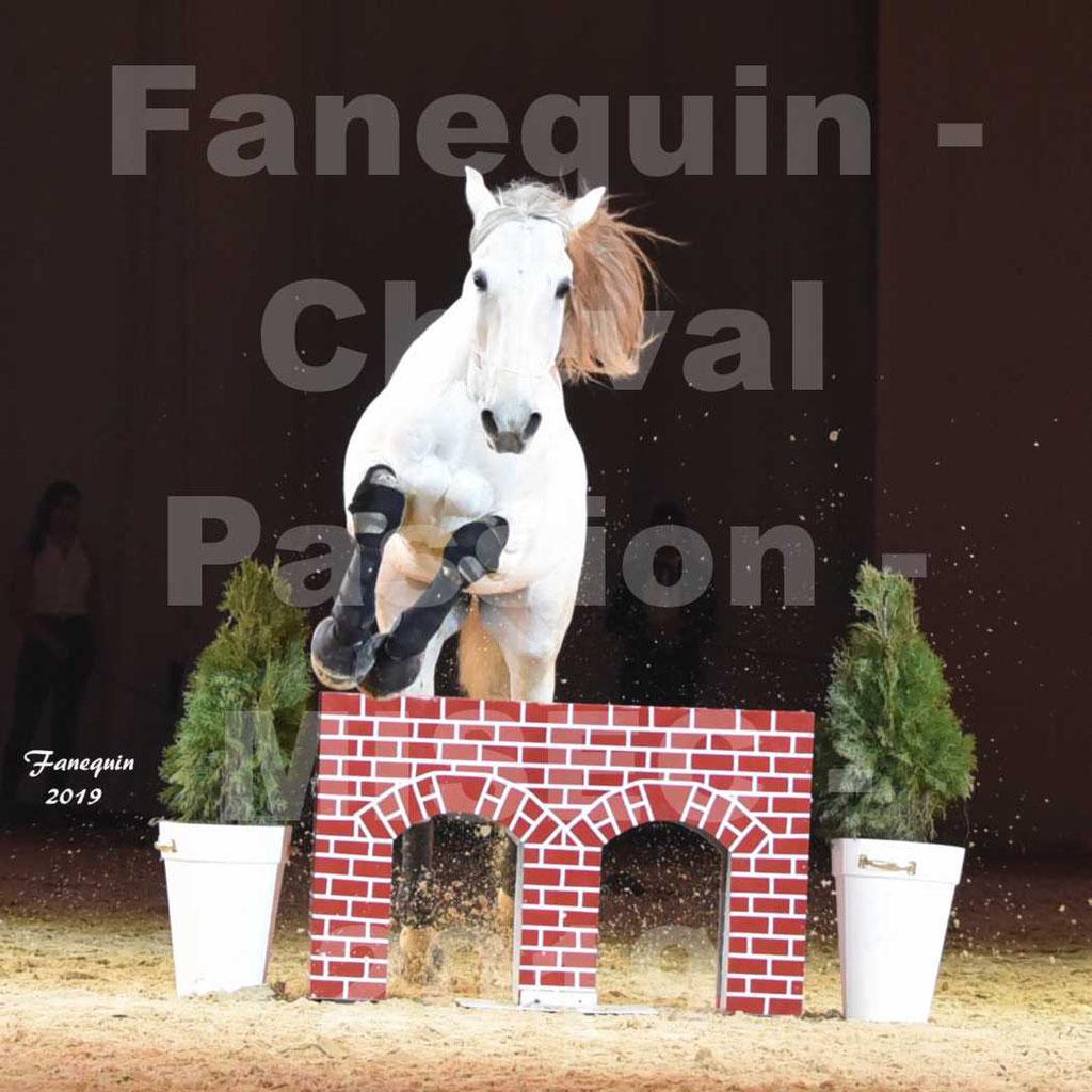 Cheval Passion 2019 - M. I. S. E. C. - Michel CASSAN & cheval en liberté - 08