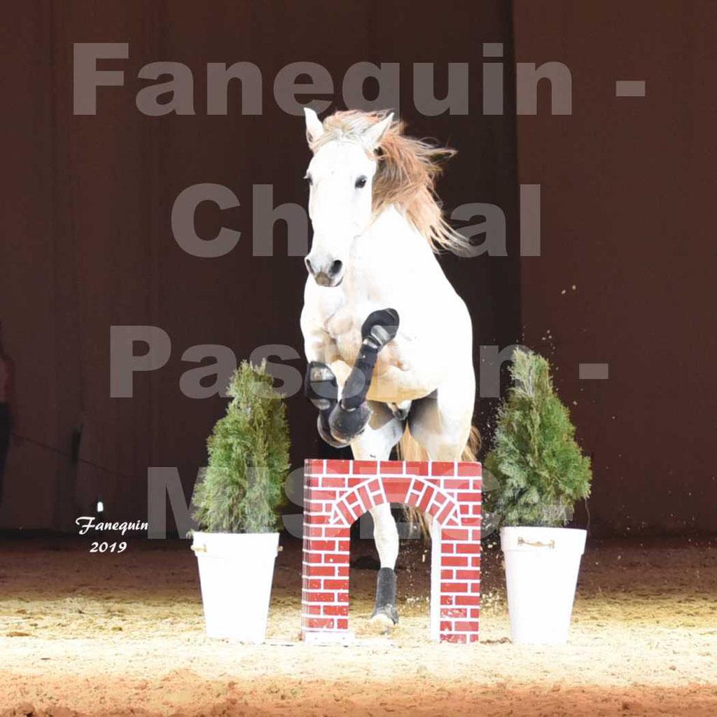 Cheval Passion 2019 - M. I. S. E. C. - Michel CASSAN & cheval en liberté - 12