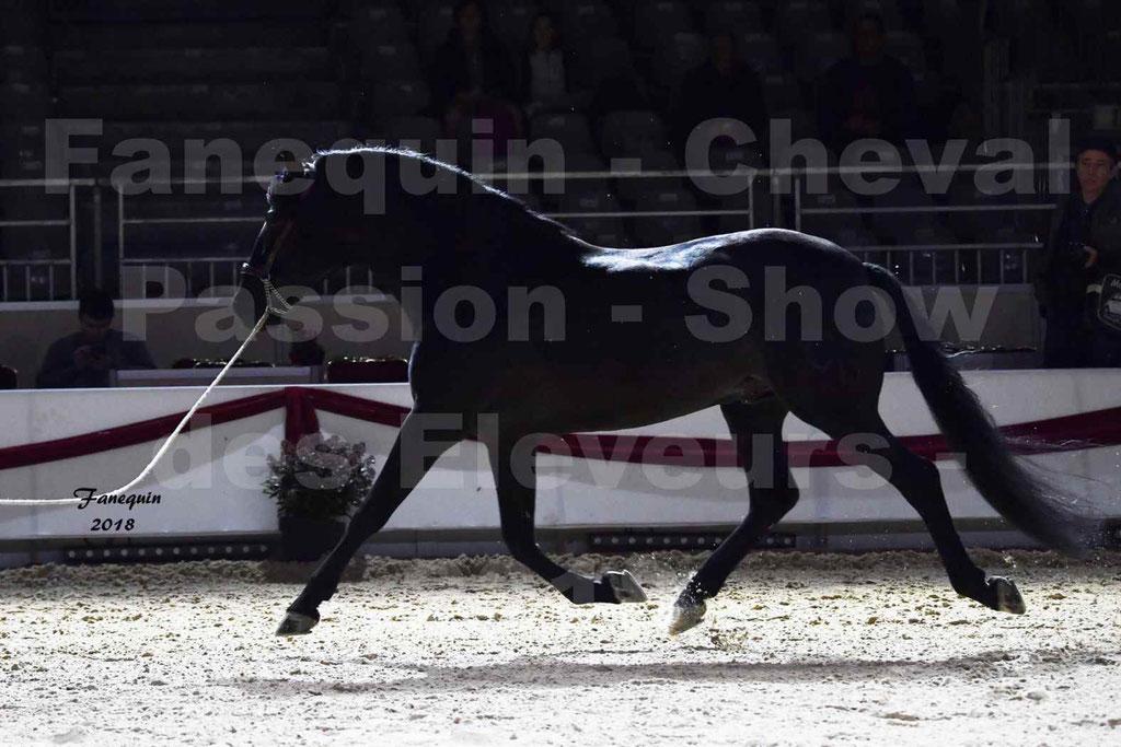 Cheval passion 2018 - Show des éleveurs - Chevaux ESPAGNOL - 1