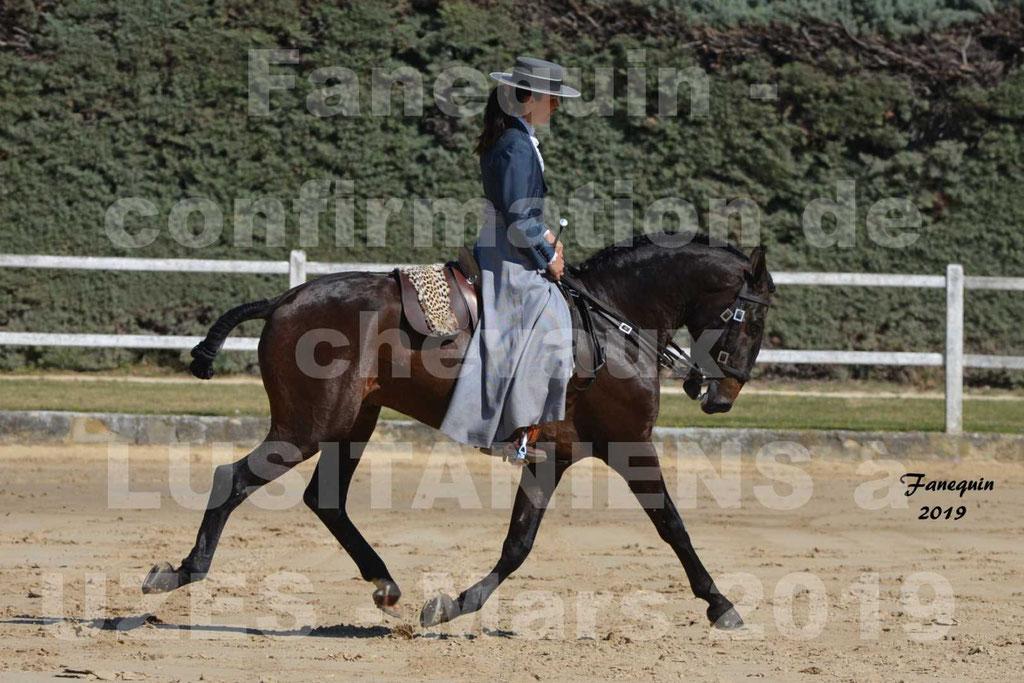 Confirmation de chevaux LUSITANIENS  aux Haras d'UZES le 30 Mars 2019 - Étalon bai Monté