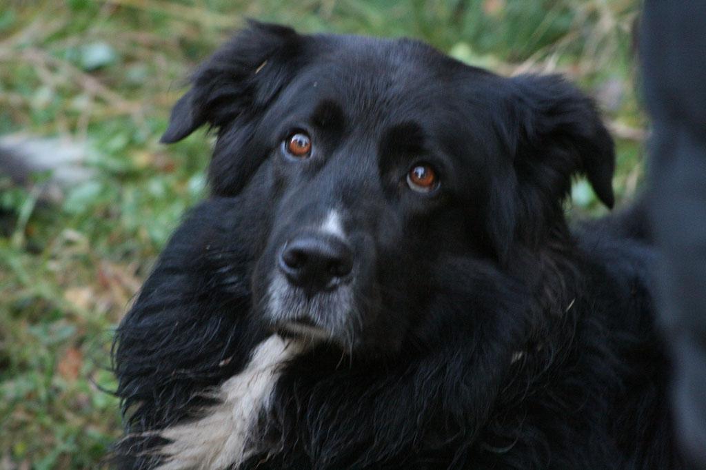 Leider mussten wir unseren Felix gehen lassen,er hatte einen bösartigen Tumor an der Hauptschlagader an der Leiste. Wir vermissen ihn sehr.