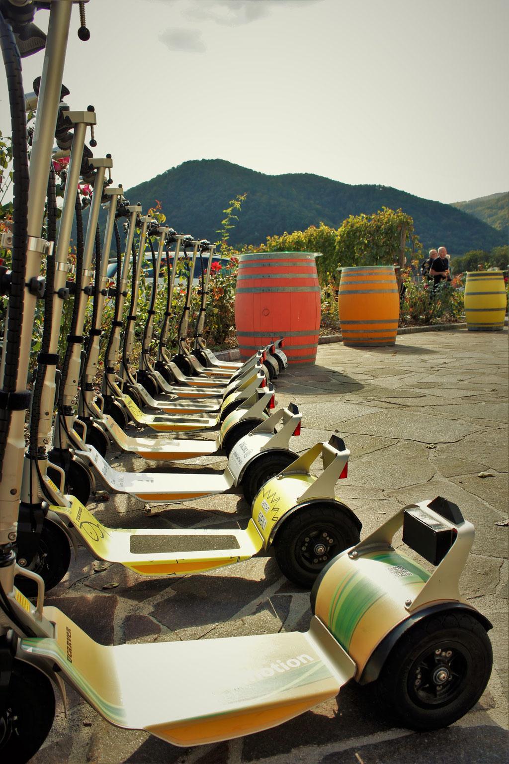 Ausflugsziel in die Wachau, Sightseeing, Verkostung Domäne Wachau Besuch Wandern Radfahren Freizeit Erlebnis Fahrrad Alternative Verleih