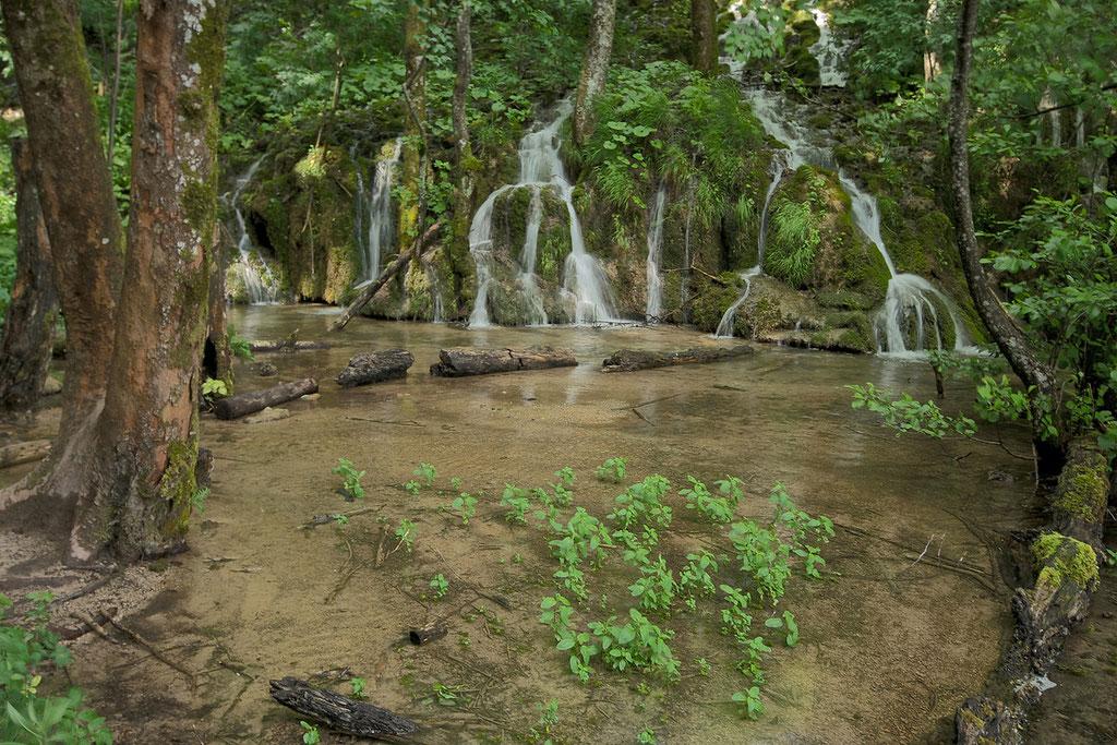 Lagune im Wald © c.rebl
