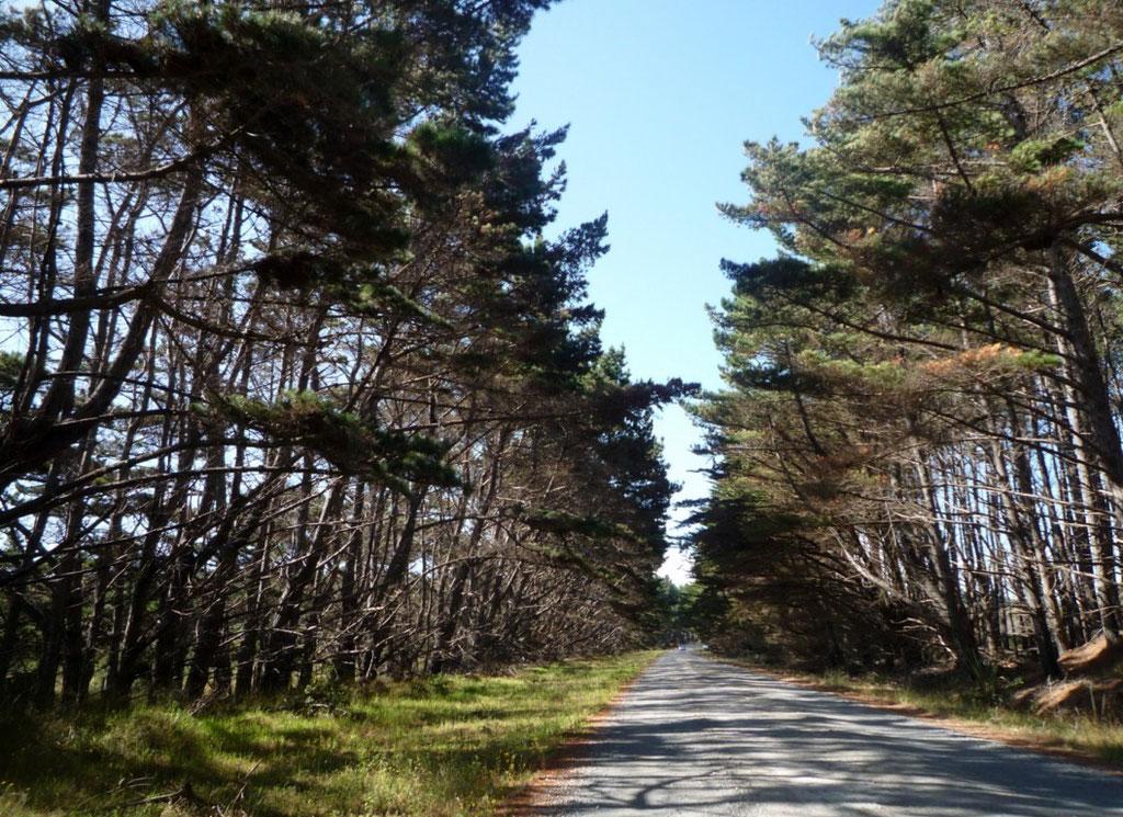 Camino a Ninety Mile Beach