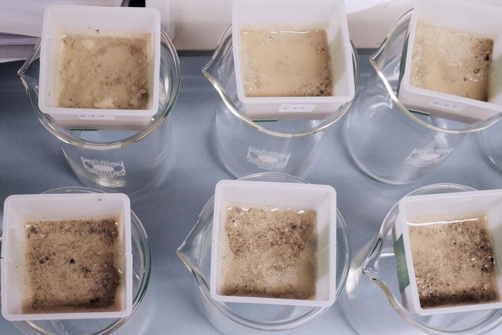 Die Bakteriensuspension, Urea- und  CaCl-Lösung wurden dem Sand hinzugegeben.