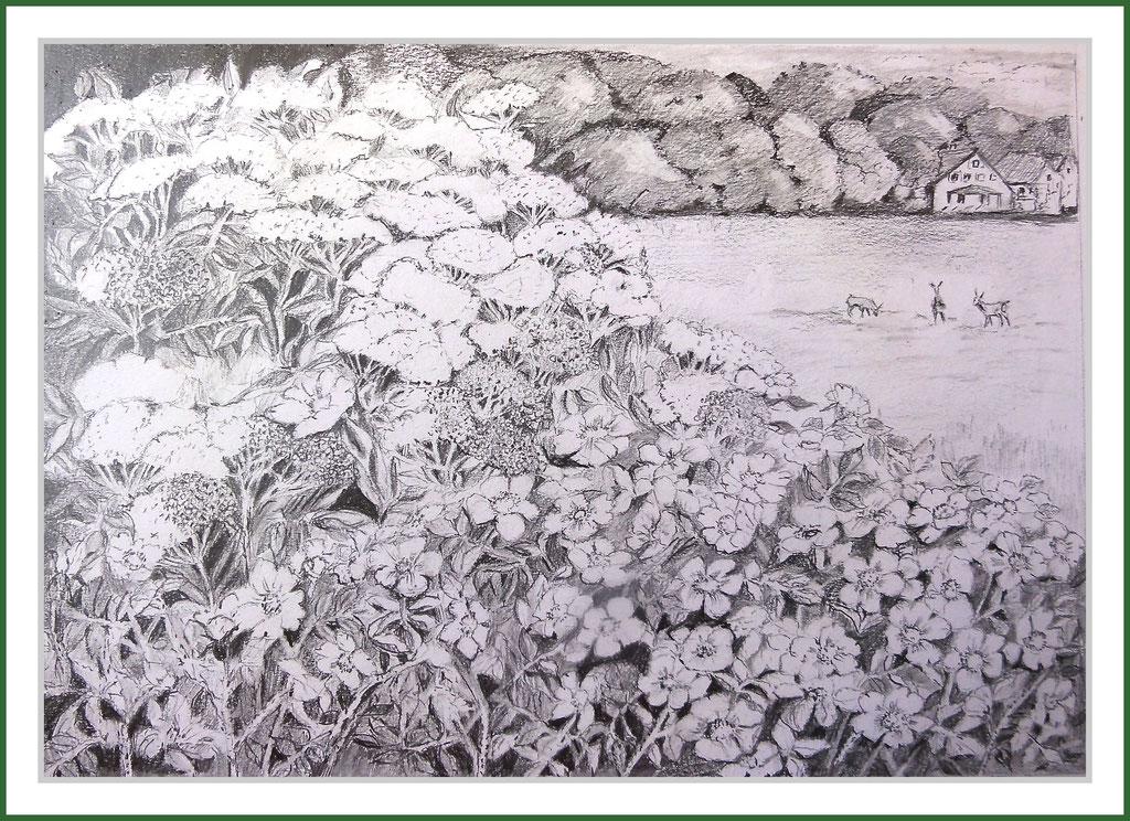 Zeichnung : Hiddensee