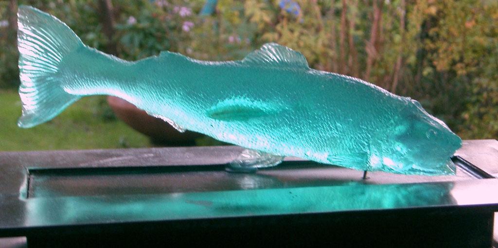 Forelle blau