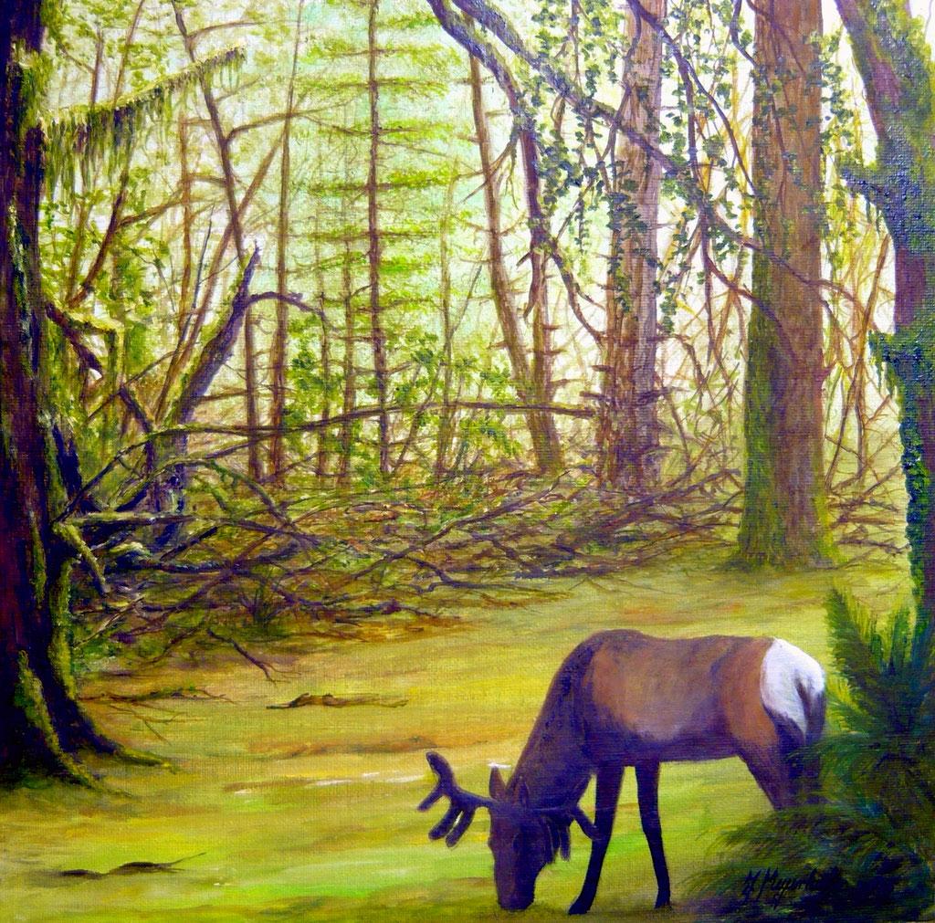 Im Schutz des Waldes-Öl 2013-30x30 cm-120 €