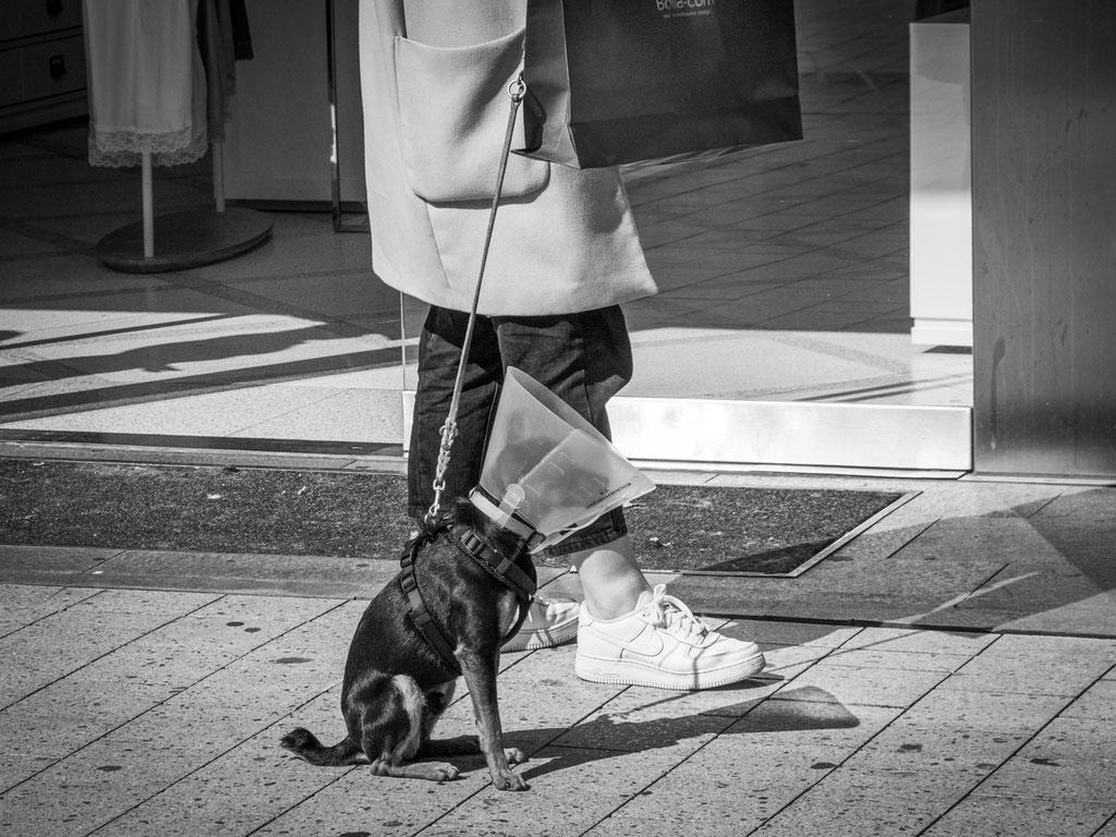 04.05.2020 Hunde können sich auch mit dem COVID-19 Virus anstecken