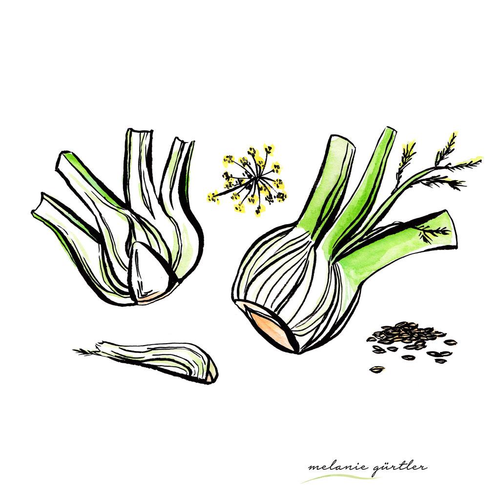 Foodillustration Watercolor Aquarell - Fenchel