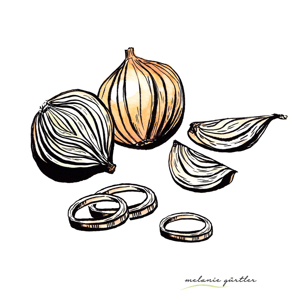 Foodillustration Watercolor Aquarell - Zwiebel