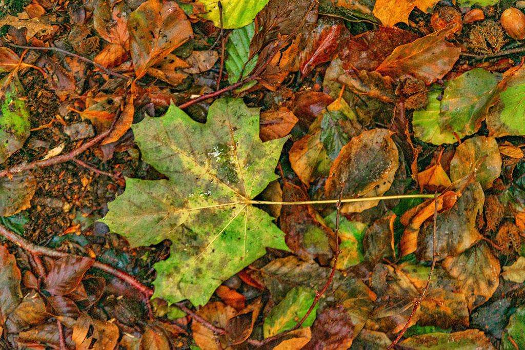 Groen herfstblad