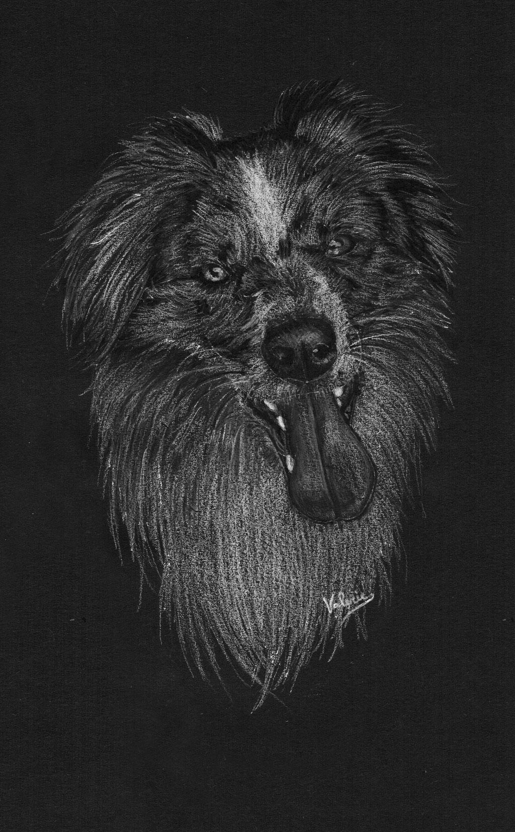 Dierenportret border collie: Wit potlood en houtskool op zwart papier (2017)