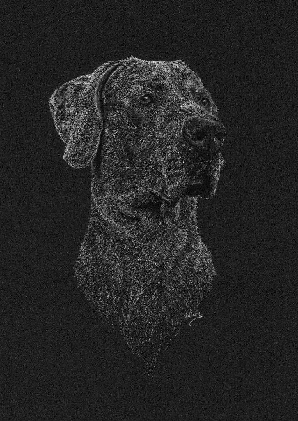 Dierenportret duitse dog: Wit potlood op zwart papier (2018)