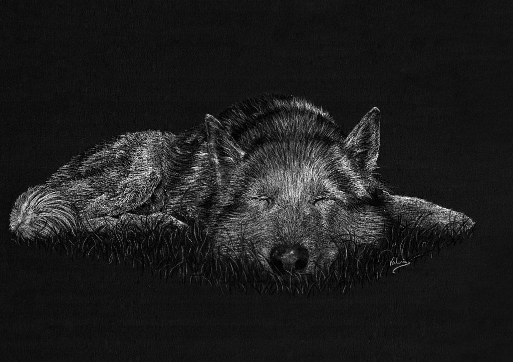 Dierenportret husky: Wit potlood en houtskool op zwart papier (2020)