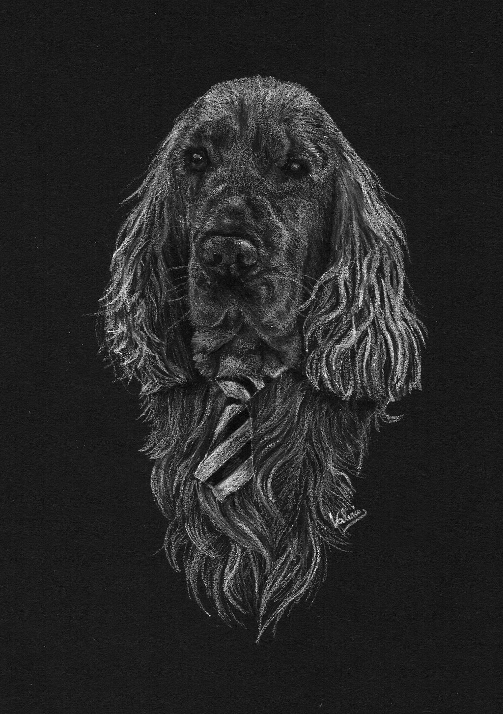 Dierenportret cocker spaniel wearing a tie: Wit potlood op zwart papier (2016)