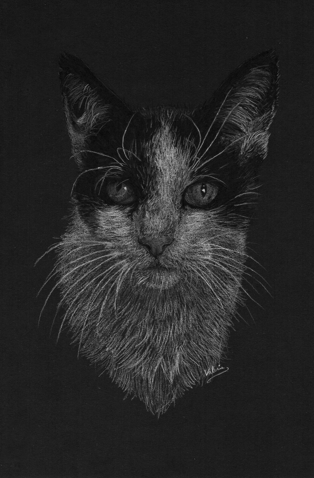 Dierenportret zwart-witte kat: Wit potlood op zwart papier (2017)