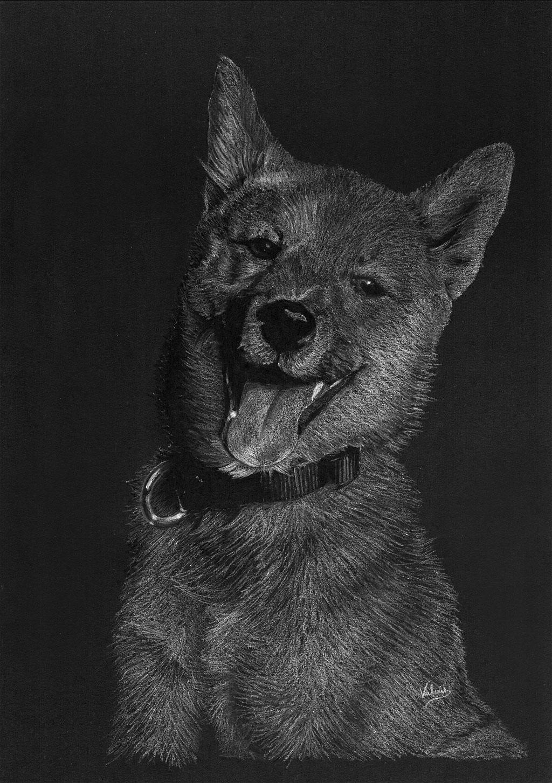 Dierenportret Shiba Inu pup: Wit potlood op zwart papier (2016)