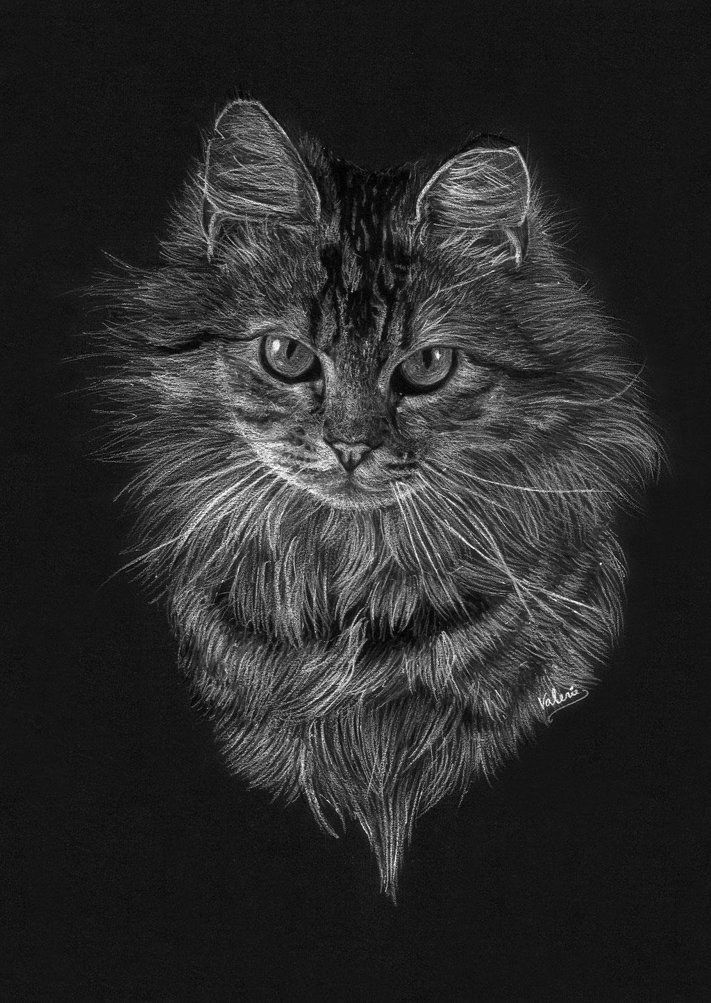 Dierenportret tijgerkat: Wit pastelpotlood en houtskool op zwart papier (2016)