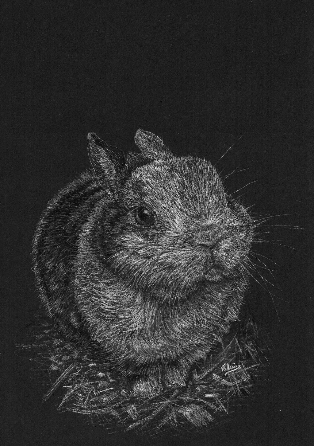 Dierenportret gevlekt konijn in stro: Wit potlood op zwart papier (2016)