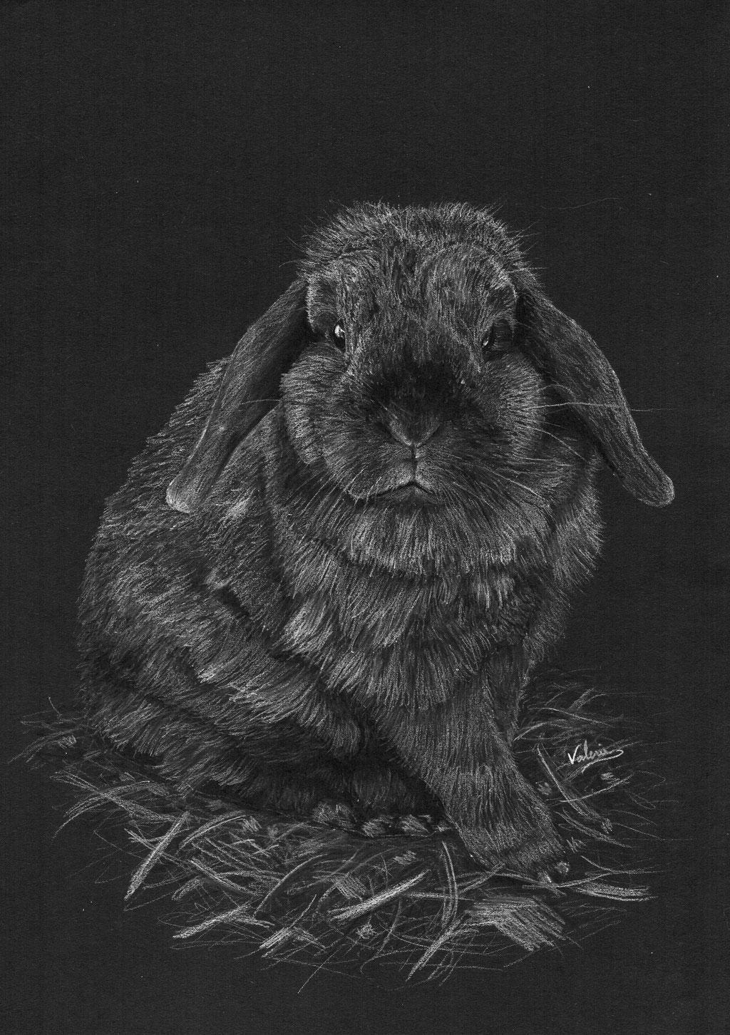 Dierenportret bruin konijn in stro: Wit potlood op zwart papier (2016)