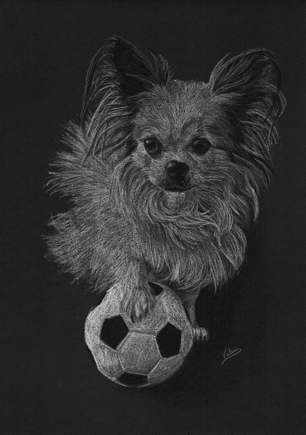 Dierenportret chihuahua met voetbal: Wit potlood en houtskool op zwart papier (2017)