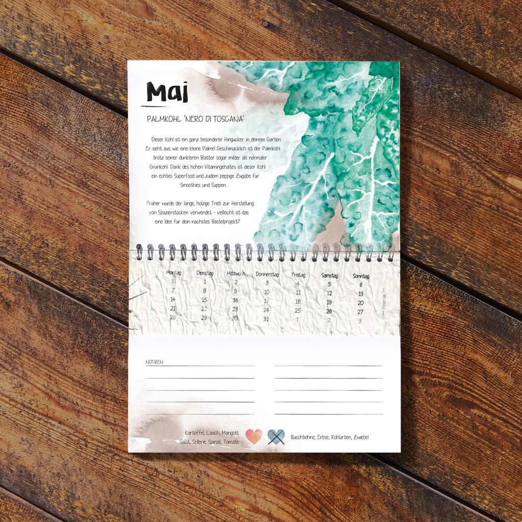 Der Wachsende Kalender 2022 Vergessene Sorten mit einpflanzbarem Samenpapier beinhaltet im Monat Mai den Palmkohl 'Nero di Toscana',  handillustriert von mir.