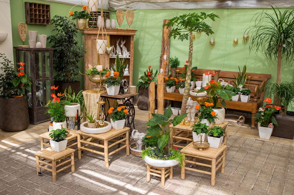 Zimmerpflanzen online bestellen mit Lieferung und Abholung in Würzburg