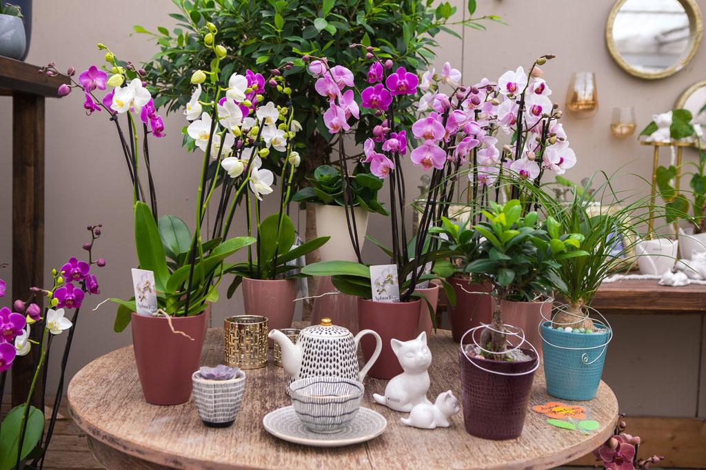 Zimmerpflanzen kaufen, online bestellen Gärtnerei Würzburg