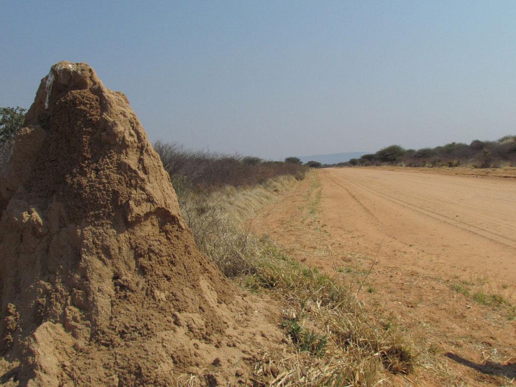 Termitenhügel an der Strasse