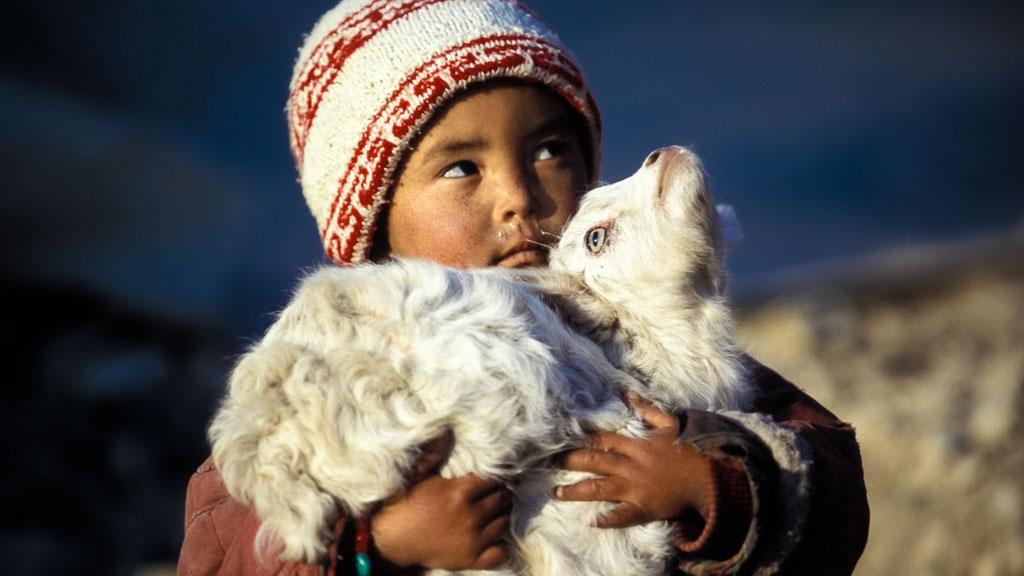 Ladakhischer Junge mit Kaschmir-Ziege