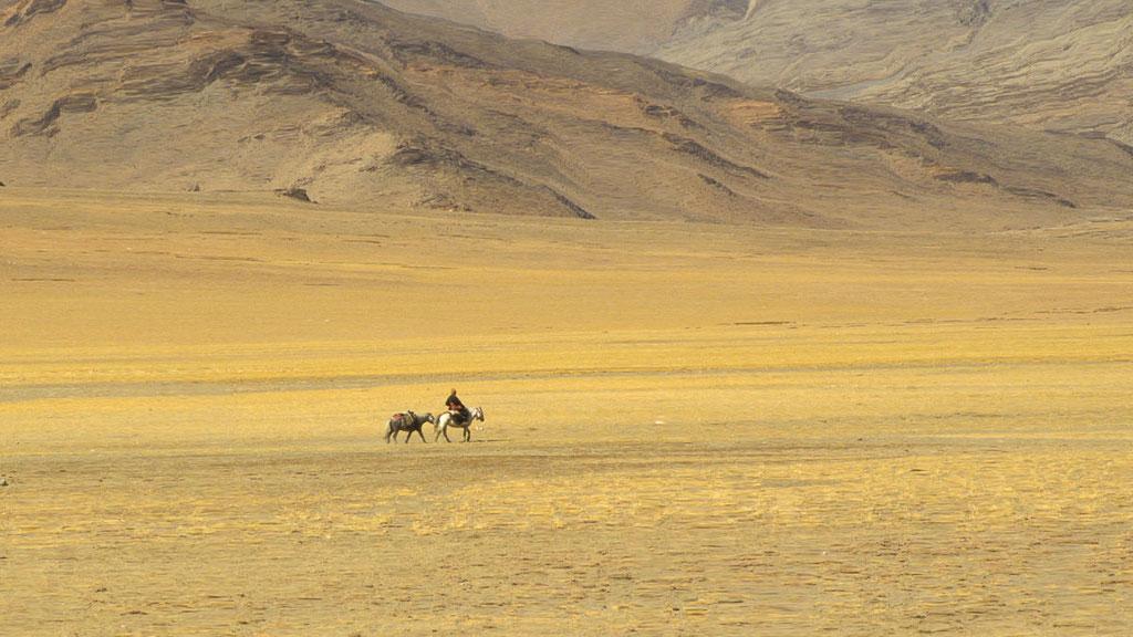 Einsamer Nomade auf dem Changthang-Hochplateau in Ladakh