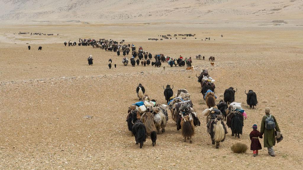 Ladakhische Nomaden ziehen sechs bis acht Mal pro Jahr um