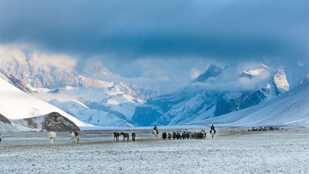 Ladakhische Nomaden auf der Suche nach Gras