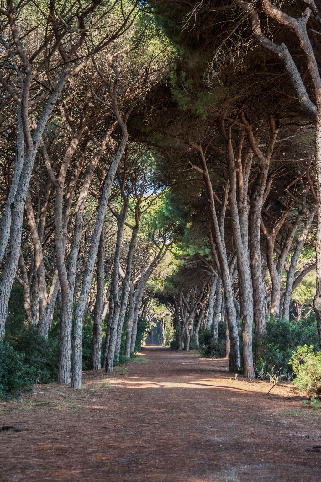 Vacanza in Maremma - la Pineta della Feniglia