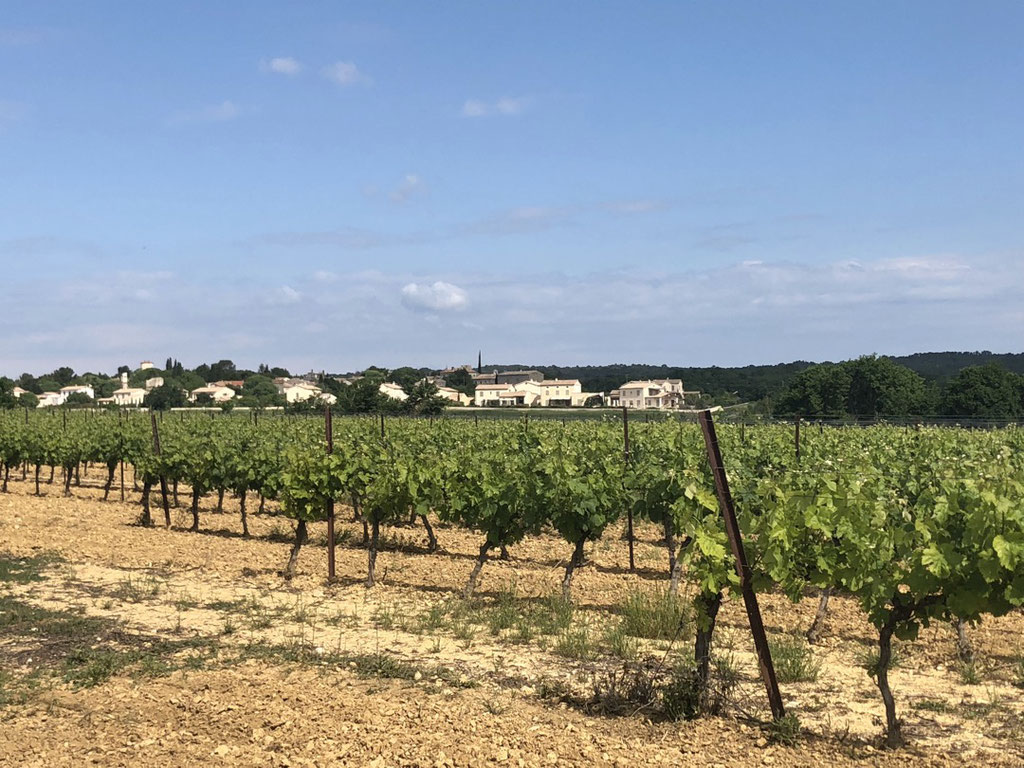The beautiful wine yards near Bourdic, South of France