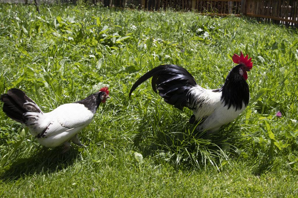 Hier fühlen sich auch die Hühner wohl