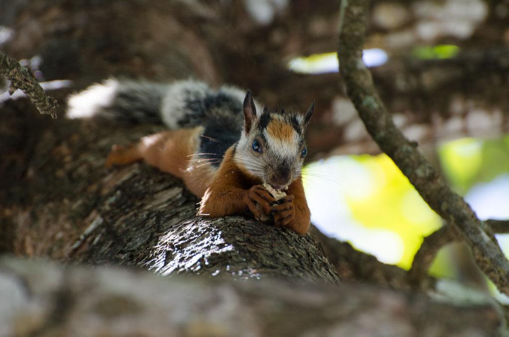 Das kleine Eichhörnchen besuchte uns Täglich