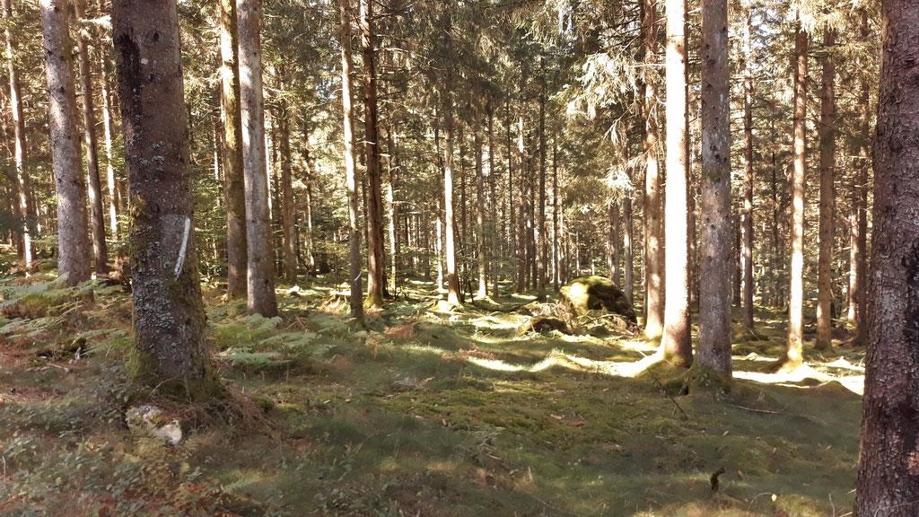 ... ein Zauberwald