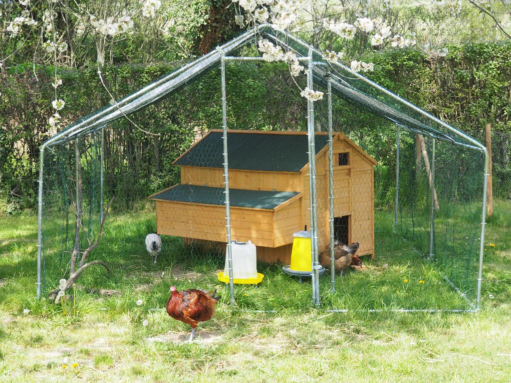 Die Hühnerklique