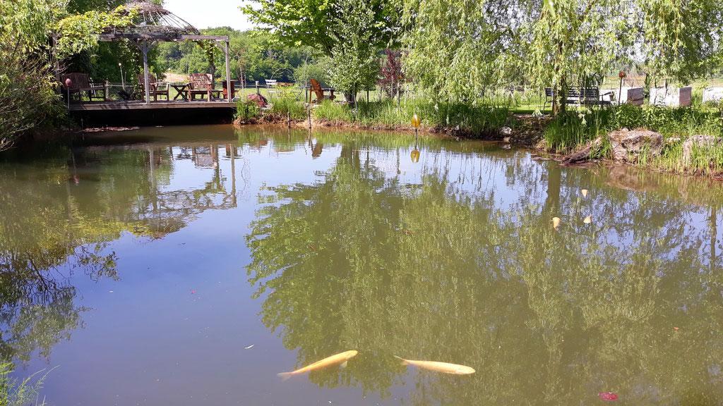 05.05. die Fische tummeln sich in den obersten wärmeren Schichten des Wassers