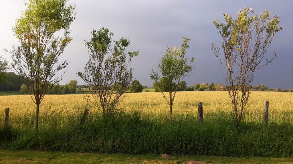 09.05. und der Blick übers Feld ist total spannend